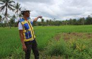 Dinas PUPR Malut Butuh Rp.50 Miliar Bangun Irigasi di Halsel